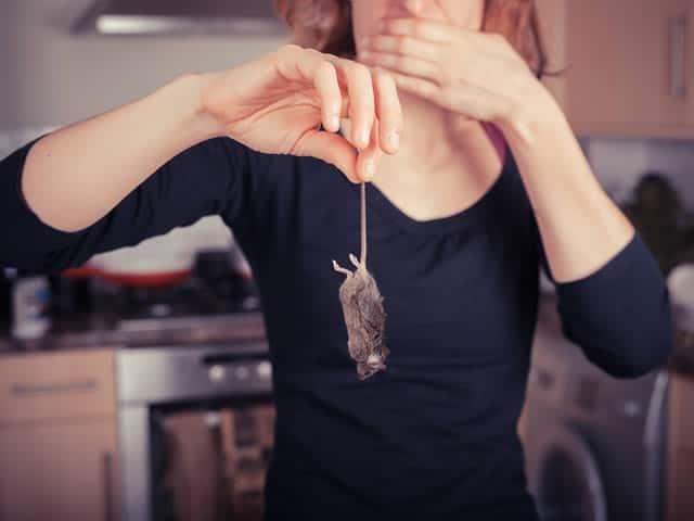Ratten- of Muizenoverlast is geen pretje | ratten bestrijden